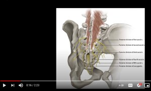 Screenshot from Video about the Middle Cluneal Nerve and Coccyx Pain